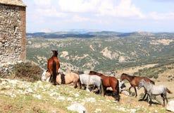 τα ανδαλουσιακά άλογα κοπαδιών επικολλούν Στοκ Εικόνα