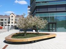 Τα ανθίζοντας δέντρα κερασιών άνοιξη στοκ εικόνα με δικαίωμα ελεύθερης χρήσης