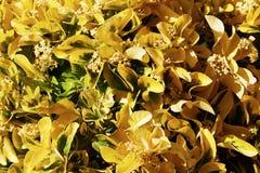 Τα ανθίζοντας φυτά με τα όμορφα φύλλα Στοκ Φωτογραφίες
