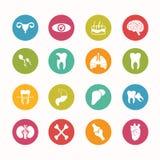 Τα ανθρώπινα εικονίδια ανατομίας καθορισμένα τη σειρά κύκλων Στοκ εικόνες με δικαίωμα ελεύθερης χρήσης