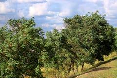 Ταλαντεμένος δέντρα στο υπόβαθρο των σύννεφων Στοκ εικόνα με δικαίωμα ελεύθερης χρήσης