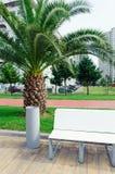 Τα απορρίματα μπορούν και πάγκος στο πάρκο πόλεων με τους φοίνικες Στοκ Εικόνες