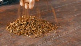Τα αρσενικά χέρια τσαλακώνουν τα ξηρά φύλλα του καπνού στον πίνακα απόθεμα βίντεο