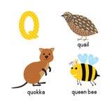 Τα αστεία εικονίδια παιδιών γραμμάτων Q ABC θέτουν: quokka, ορτύκια, μέλισσα βασίλισσας Στοκ Εικόνες
