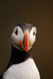 τα ατλαντικά φτερά διευθύ& Στοκ εικόνα με δικαίωμα ελεύθερης χρήσης