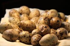 Τα αυγά γλάρων στη φωλιά Στοκ Εικόνες