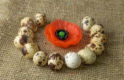 Τα αυγά ορτυκιών και οι σπόροι παπαρουνών είναι σε έναν κύκλο σε έναν ξύλινο πίνακα στοκ εικόνα με δικαίωμα ελεύθερης χρήσης