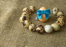 Τα αυγά ορτυκιών και το αυγό κοτόπουλου με ένα μπλε υποκύπτουν γύρω από να βρεθούν σε έναν ξύλινο πίνακα στοκ φωτογραφία με δικαίωμα ελεύθερης χρήσης