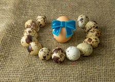 Τα αυγά ορτυκιών και το αυγό κοτόπουλου με ένα μπλε υποκύπτουν γύρω από να βρεθούν σε έναν ξύλινο πίνακα στοκ φωτογραφίες με δικαίωμα ελεύθερης χρήσης