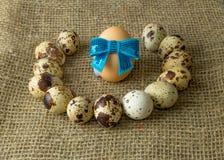 Τα αυγά ορτυκιών και το αυγό κοτόπουλου με ένα μπλε υποκύπτουν γύρω από να βρεθούν σε έναν ξύλινο πίνακα στοκ εικόνες με δικαίωμα ελεύθερης χρήσης