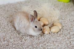 Τα αυγά Πάσχας βρίσκονται εκτός από το μικρό κουνέλι Στοκ Εικόνες