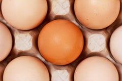 Τα αυγά στα κιβώτια χαρτοκιβωτίων που βάζουν, τοπ άποψη Στοκ Εικόνα