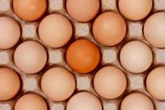 Τα αυγά στα κιβώτια χαρτοκιβωτίων που βάζουν, τοπ άποψη Στοκ Εικόνες