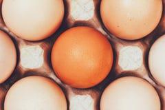 Τα αυγά στα κιβώτια χαρτοκιβωτίων που βάζουν, τοπ άποψη Στοκ φωτογραφίες με δικαίωμα ελεύθερης χρήσης