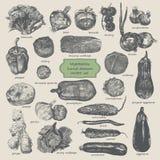 Τα λαχανικά δίνουν το συρμένο διανυσματικό σύνολο Στοκ Εικόνες