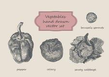 Τα λαχανικά δίνουν το συρμένο σύνολο Πιπέρι, σέλινο, λάχανο κραμπολάχανου Στοκ εικόνα με δικαίωμα ελεύθερης χρήσης