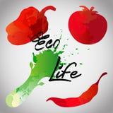 Τα λαχανικά καθορισμένα τους συρμένους λεκέδες και τους λεκέδες watercolor με έναν ψεκασμό Στοκ φωτογραφία με δικαίωμα ελεύθερης χρήσης
