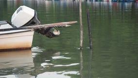Τα αλιευτικά σκάφη με την εξωτερική μηχανή απόθεμα βίντεο