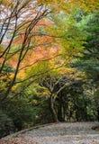 Τα βήματα που οδηγούν κάτω με το φθινόπωρο χρωμάτισαν τα φύλλα σε Arashiyama, KY Στοκ εικόνα με δικαίωμα ελεύθερης χρήσης
