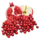 Τα βακκίνια, ρόδι και Apple Στοκ Εικόνες