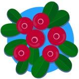 Τα βακκίνια Στοκ εικόνες με δικαίωμα ελεύθερης χρήσης