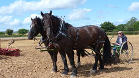 Τα βαριά άλογα σε μια χώρα παρουσιάζουν στην Αγγλία Στοκ φωτογραφία με δικαίωμα ελεύθερης χρήσης