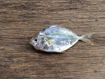 Τα βιετναμέζικα θαλάσσια άσπρα ψάρια Στοκ φωτογραφία με δικαίωμα ελεύθερης χρήσης