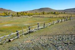 Τα βοοειδή συγκεντρώνουν στα βουνά Altai στοκ φωτογραφία