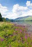 Τα βουνά περιοχής λιμνών και το ρόδινο κορίτσι λουλουδιών δένουν το νερό Derwent το εθνικό πάρκο Cumbria UK λιμνών Στοκ εικόνα με δικαίωμα ελεύθερης χρήσης