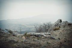 Τα βουνά στην ομίχλη Στοκ εικόνα με δικαίωμα ελεύθερης χρήσης