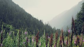 Τα βουνά στη βροχή και την υδρονέφωση ρίχνουν την υγρής και κρύας βουνών ατμόσφαιρα σταλαγματιάς, Δασώδεις λόφοι στην ομίχλη φιλμ μικρού μήκους