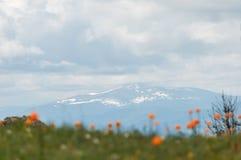 Τα βουνά σύστασης καλύπτουν τα λουλούδια Στοκ Εικόνες