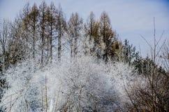 Τα βουνά Changbai, Heilongjiang της Κίνας Στοκ φωτογραφίες με δικαίωμα ελεύθερης χρήσης