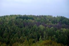Τα βουνά Swietokrzyskie Στοκ Εικόνες