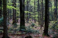 Τα βουνά Swietokrzyskie Στοκ Φωτογραφίες