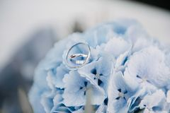 Τα γαμήλια δαχτυλίδια βρίσκονται μπλε στενό σε έναν επάνω λουλουδιών στοκ φωτογραφία