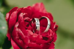 Τα γαμήλια δαχτυλίδια στο κόκκινο αυξήθηκαν Στοκ φωτογραφίες με δικαίωμα ελεύθερης χρήσης