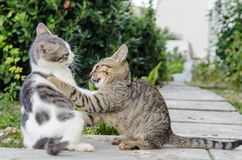 Τα γατάκια γατών που παίζουν τις άγρια περιοχές απομακρύνονται Στοκ φωτογραφία με δικαίωμα ελεύθερης χρήσης