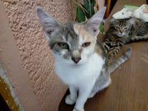 Τα γατάκια κατοικίδιων ζώων μου Στοκ Φωτογραφία