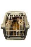 τα γατάκια κιβωτίων ανασκ Στοκ φωτογραφία με δικαίωμα ελεύθερης χρήσης