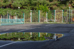 Τα γατάκια παίζουν κοντά στις λίμνες Στοκ Εικόνες
