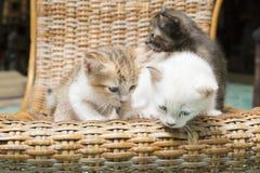 Τα γατάκια στην καρέκλα βρίσκουν τον τρόπο κάτω από το πάτωμα στοκ εικόνες με δικαίωμα ελεύθερης χρήσης