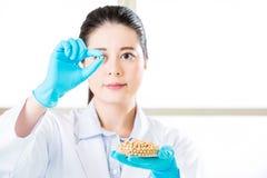 Τα γενετικά τρόφιμα ΓΤΟ τροποποίησης μπορούν να σώσουν τα εκατομμύρια των ανθρώπων Στοκ φωτογραφία με δικαίωμα ελεύθερης χρήσης