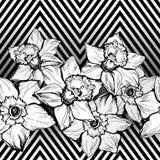 Τα γεωμετρικά άνευ ραφής σύνορα σχεδίων με το χέρι πνίγουν τα λουλούδια Daffodils απεικόνιση αποθεμάτων