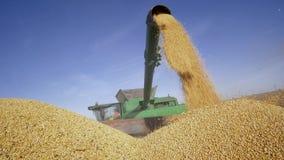 Τα γεωργικά μηχανήματα ξεφορτώνουν την πρόσφατα κομμένη σόγια στο ρυμουλκό ενάντια στον ουρανό κατά τη διάρκεια της συγκομιδής φθ απόθεμα βίντεο