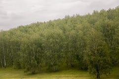 Τα γκρίζα σύννεφα στον πρόωρο ουρανό φθινοπώρου πέρα από τους πράσινους τομείς, τα δέντρα, τα δάση και τα τεράστια βουνά κλείνουν Στοκ Εικόνες