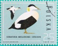 Τα γραμματόσημα ήταν τυπωμένων στη Νικαράγουα Στοκ Εικόνες