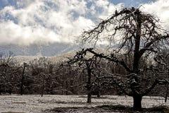 Τα γυμνά δέντρα της Apple καλύπτονται με το χιόνι στο Smokies Στοκ Εικόνα
