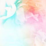Τα γλυκά τριαντάφυλλα χρώματος ανθίζουν στο μαλακό και ύφος θαμπάδων στη σύσταση εγγράφου μουριών Στοκ Εικόνα