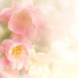 Τα γλυκά τριαντάφυλλα χρώματος ανθίζουν στο μαλακό και ύφος θαμπάδων στη σύσταση εγγράφου μουριών Στοκ Εικόνες